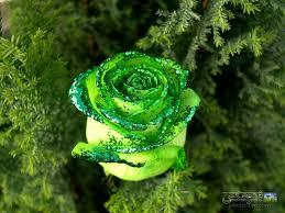 عطر کولواتر سبز