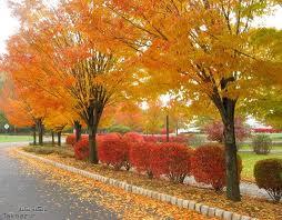 عطر مناسب فصل پاییز